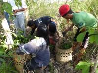植林する苗木の準備