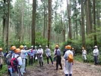 100年生の林分