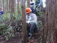女性社員も間伐作業