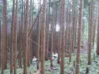 木が倒れる瞬間