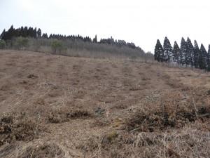 原木の伐採後