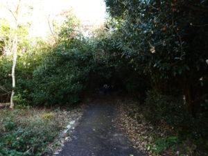 薄暗い登山道入口