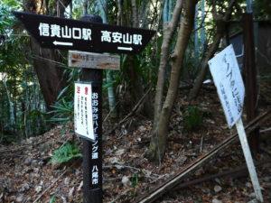 イノシシとブタの交雑種イノブタに注意