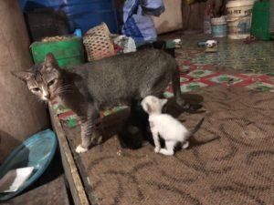 猫さんいっぱい飼っています!